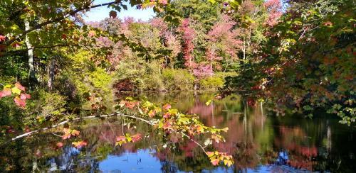 Fall Display courtesy of Susannah Carey